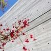 コンクリート住宅のメリット・デメリットと美しいデザイン事例10選