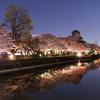 長岡天満宮八条が池の桜