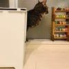 【猫】ハマグリのおトイレ事情