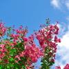 夏空に花を添えて | LEICA MACRO 45mm & LEICA 12-60mm