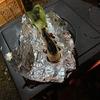 冬キャンプ入門~薪ストーブでネギを焼く~