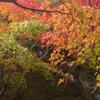 秋の京都2017、国宝展と東福寺へ☆ 神戸三宮の和食料理は安東へ