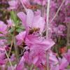 お花とミツバチ