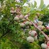 ずぼらガーデニング お手入れいらずの丈夫な植物たち