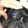 眼が痛い~自発性慢性角膜上皮欠損(SCCEDs:スケッズ)~