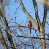 カラフルな野鳥たち in NewYork 2 !