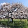 桜の写真あれこれ【2021年】