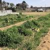 秋冬野菜専用エリアの整理整頓をしました