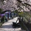 【FUJIFILM】とある休日:大岡川プロムナードの桜と商店街