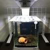 アベニーパファー水槽で「Tetra Cool Fan」を去年夏と今年夏使った感想