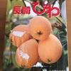 初夏の長崎便りが届いたよヽ(*^ω^*)ノ