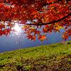 紅葉の彦根城