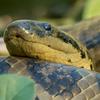 アスンシオン市立動物園 ワニとヘビ