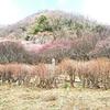 運動不足解消 アウトドア気分も登山気分も味わえた そして梅も楽しめた 湯河原「梅の宴」幕山登ってみた