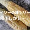 【ダイソーの種シリーズ】やっとトウモロコシの収穫しました。
