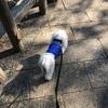 犬の1回は大きくても小さくても同じ。