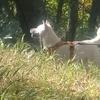 犬と一緒の山行