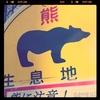 秋田でのクマによる死亡事故:中間まとめと雑感(追記あり)