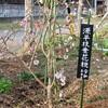 「佐久の季節便り」、「花桃(はなもも)」が咲いて、「花祭り」…。