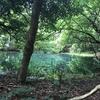 「マツコの知らない世界」で紹介された丸池様に行ってきた。