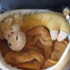 2008年12月1日 ラクダの安眠まくらが人気者