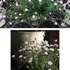 花かんざし: カンガルーやコアラと一緒でオーストラリア原産ですが,日本らしい名前を付けられました.「かんざし」の名前を持つ植物は他にも沢山ありました.日本人はかんざしが大好きだったんですね.
