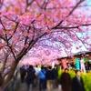 2018年日本各地の桜開花時期は?去年より早い?遅い?