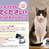 【写真発表】「パソコンとネコちゃんを見せてもらうキャンペーン」開催