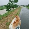 今日も、雨。