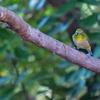 大阪城公園の野鳥 2020.12.3