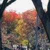 鹿沼公園の紅葉 始まりました! (2020年11月2日現在)