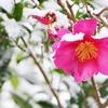 冬を乗り越えるための5つの戦略