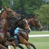 アメトーーク 11月21日 武豊からディープインパクトまで競馬話が満載!「競馬大好き芸人」