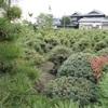 畑に盆栽が生えてる光景