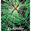 精霊動物 蜘蛛について