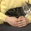 愛子さまの猫!セブンの種類はニャンだ?