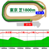 毎日王冠コース攻略・見解|東京競馬場芝1800m