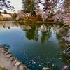 米沢城のお堀(山形県米沢)