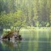 生命(いのち)の湖 【『わたしは灰猫』を読んで】
