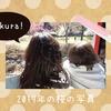 桜の写真◆小田原わんぱく広場の桜がとても綺麗だった