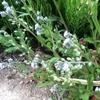 5月の雑草たち