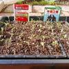 トマトとナスの苗の鉢上げとその後