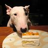 """【食べムラ】【食欲不振】【拒食】【偏食】【小食】【老犬(シニア犬)の食欲減退】言葉の意味にもムラがある ~あらためて""""食""""を考える~"""