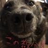 甲斐犬サンとネェネの「うん、ウン、運⁈」の巻〜専業主婦4日目(´;ω;`)。