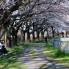 見沼田んぼで春を満喫してきた