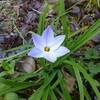 金曜デモと小泉イラク迷言と春の花