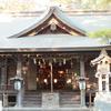 四葉のクローバーならぬ四本の松葉を見つけに、平塚前鳥神社の幸せの松。