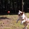 ボールキャッチの瞬間