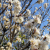 花粉症におすすめ アロマスプレー