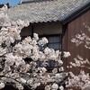 一の坂川:桜⑤